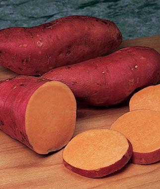 Sweet Potato, Beauregard 1 Pack (12 bareroots) Sweet Potato Roots, Sweet Potato, Sweet Potatoes, Sweetpotato, Garden Seeds, Vegetable Seeds, Garden