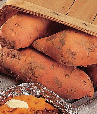 Sweet Potato, Bush Porto Rico 1 Pack (12 bareroots) Sweet Potato Roots, Sweet Potato, Sweet Potatoes, Sweetpotato, Garden Seeds, Vegetable Seeds, Garden