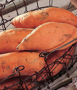 Sweet Potato, Centennial 1 Pack (12 bareroots) Sweet Potato Roots, Sweet Potato, Sweet Potatoes, Sweetpotato, Garden Seeds, Vegetable Seeds, Garden