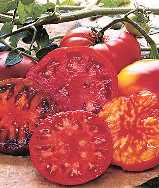 Tomato, Heirloom Taste Collection 4 Seed Pkts. (1 of each) Heirloom Tomatoes, Heirloom Tomato Seeds, Heirloom Seeds, Heirloom Tomato Plants, Tomato Seeds