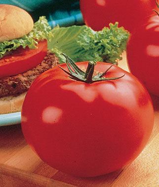 Tomato, Big Beef Hybrid 1 Pkt. (30 seeds) Tomatoes, Tomato Seeds, Beefsteak Tomatoes, Slicing Tomatoes, Tomato Starts, Tomato Plants