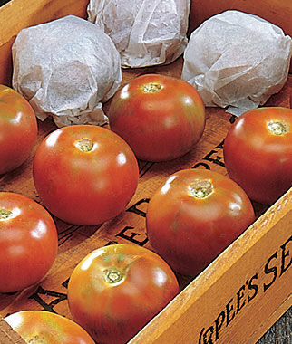 Tomato, Burpee's Long-Keeper 1 Pkt. (30 seeds) Tomatoes, Tomato Seeds, Beefsteak Tomatoes, Slicing Tomatoes, Tomato Starts, Tomato Plants