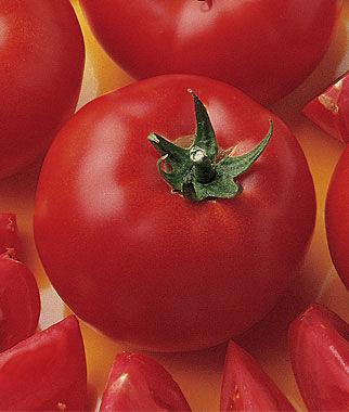 Tomato, Bush Early Girl Hybrid 1 Pkt. (30 seeds) Tomato Seeds, Early Tomatoes, Early Tomato Seeds, Tomato Plants, Short Season Tomatoes, Garden Seeds