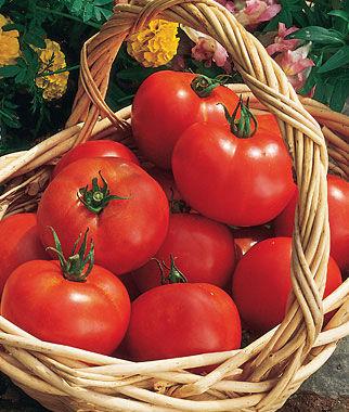 Tomato, Early Girl Hybrid 1 Pkt. (30 seeds) Tomato Seeds, Early Tomatoes, Early Tomato Seeds, Tomato Plants, Short Season Tomatoes, Garden Seeds
