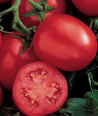 Tomato, Ensalada Hybrid 1 Pkt. (30 seeds) Tomato Seeds, Early Tomatoes, Early Tomato Seeds, Tomato Plants, Short Season Tomatoes, Garden Seeds