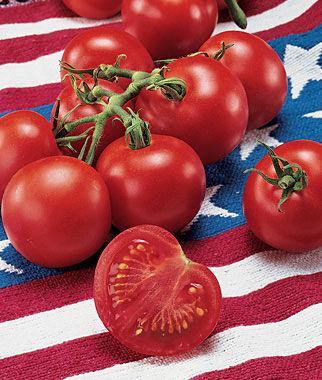 Tomato, Fourth Of July Hybrid 1 Pkt. (40 seeds) Tomato Seeds, Early Tomatoes, Early Tomato Seeds, Tomato Plants, Short Season Tomatoes, Garden Seeds