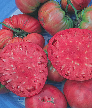 Tomato, Giant Pink Belgium 1 Pkt. (30 seeds) Heirloom Tomatoes, Heirloom Tomato Seeds, Heirloom Seeds, Heirloom Tomato Plants, Tomato Seeds