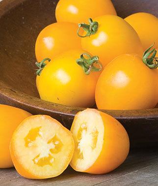 Tomato, Golden Mama Hybrid 1 Pkt. (30 seeds) Tomatoes, Tomato Seeds, Beefsteak Tomatoes, Slicing Tomatoes, Tomato Starts, Tomato Plants