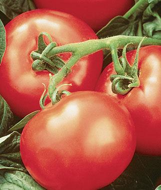 Tomato, Heatwave II Hybrid 1 Pkt. (30 seeds) Tomatoes, Tomato Seeds, Beefsteak Tomatoes, Slicing Tomatoes, Tomato Starts, Tomato Plants
