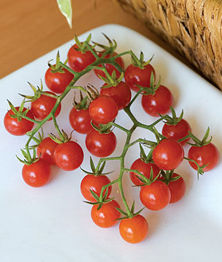 Tomato, Honeybunch 1 Pkt. (30 seeds) Cherry Tomato Seeds, Currant Tomato Seeds, Grape Tomato Seeds, Cherry Tomato, Tomato Seeds