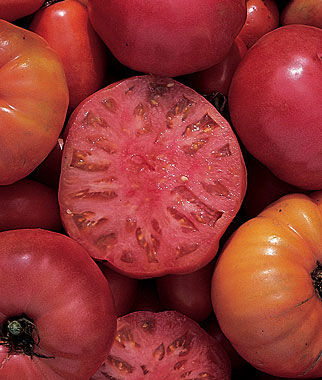 Tomato, Mortgage Lifter 1 Pkt. (50 seeds) Heirloom Tomatoes, Heirloom Tomato Seeds, Heirloom Seeds, Heirloom Tomato Plants, Tomato Seeds