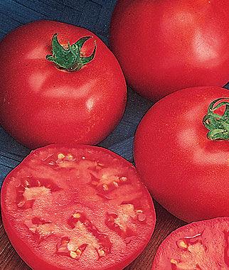 Tomato, Northern Exposure Hybrid 1 Pkt. (30 seeds) Tomato Seeds, Early Tomatoes, Early Tomato Seeds, Tomato Plants, Short Season Tomatoes, Garden Seeds