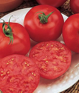 Tomato, Red October Hybrid 1 Pkt. (30 seeds) Tomatoes, Tomato Seeds, Beefsteak Tomatoes, Slicing Tomatoes, Tomato Starts, Tomato Plants