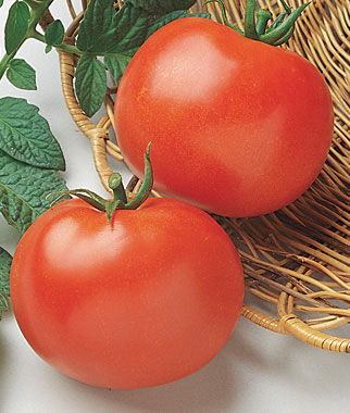 Tomato, Rutgers 1 Pkt. (125 seeds) Heirloom Tomatoes, Heirloom Tomato Seeds, Heirloom Seeds, Heirloom Tomato Plants, Tomato Seeds