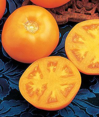 Tomato, Sweet Tangerine Hybrid 1 Pkt. (30 seeds) Tomato Seeds, Early Tomatoes, Early Tomato Seeds, Tomato Plants, Short Season Tomatoes, Garden Seeds