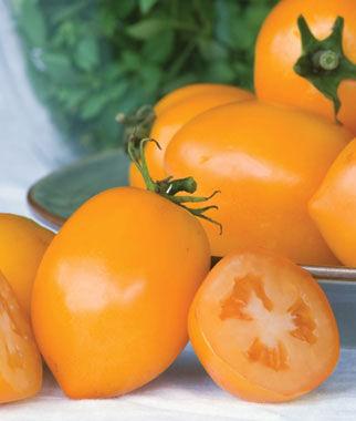 Tomato, Tangerine Mama Hybrid 1 Pkt. (15 seeds) Tomatoes, Tomato Seeds, Beefsteak Tomatoes, Slicing Tomatoes, Tomato Starts, Tomato Plants