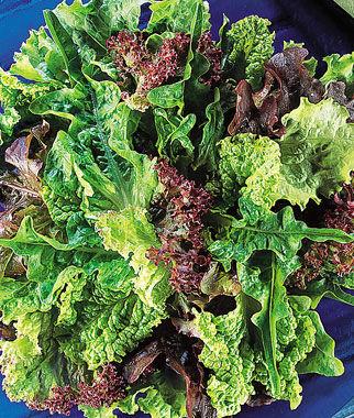 Lettuce, Fordhook Favorites Blend 1 Pkt. Lettuce Seed, Lettuce Seeds, Salad Greens, Lettuce, Lettuce Mix, Mesclun, Garden Seeds, Salad Seeds
