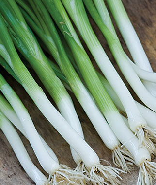 Bunching Onion, Parade 1 Pkt. (750 seeds) Onion Seeds, Onion Sets, Onion Plants, Scallion Seeds, Bunching Onions, Green Onions, Garden Seeds