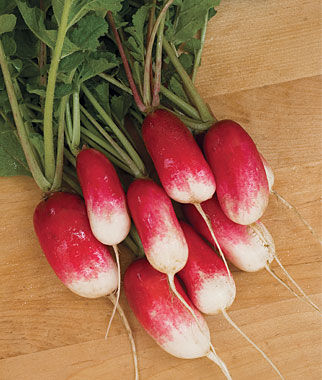 Radish, French Breakfast 1 Pkt. (450 seeds) Radish, Radish Seeds, Seeds, Vegetable Seeds, Garden Seeds, Vegetable, Garden