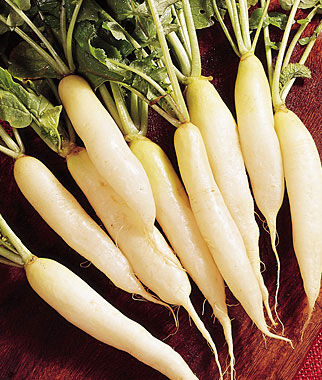 Radish, White Icicle 1 Pkt. (400 seeds) Radish, Radish Seeds, Seeds, Vegetable Seeds, Garden Seeds, Vegetable, Garden
