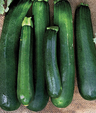 Squash, Black Beauty 1 Pkt. Zucchini Seeds, Zucchini Seed, Summer Squash, Squash, Zucchini Squash, Garden Seeds, Vegetable Seeds