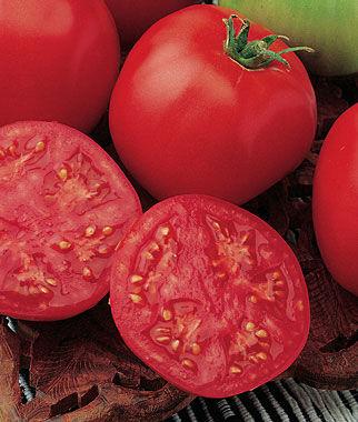 Tomato, Bucks County Hybrid 1 Pkt. (30 seeds) Tomato Seeds, Early Tomatoes, Early Tomato Seeds, Tomato Plants, Short Season Tomatoes, Garden Seeds