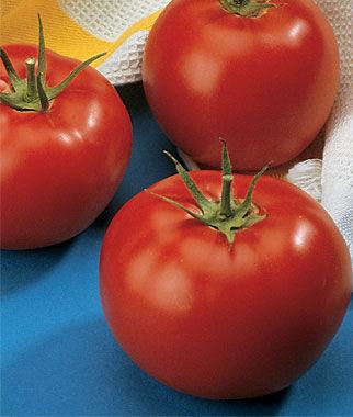 Tomato, Burpees Early Pick VF Hybrid 1 Pkt. (30 seeds) Tomato Seeds, Early Tomatoes, Early Tomato Seeds, Tomato Plants, Short Season Tomatoes, Garden Seeds