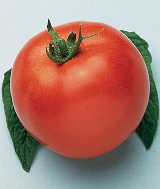 Tomato, Marglobe 1 Pkt.(50 seeds) Heirloom Tomatoes, Heirloom Tomato Seeds, Heirloom Seeds, Heirloom Tomato Plants, Tomato Seeds