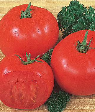 Tomato, Super Beefsteak 1 Pkt. (175 seeds) Tomatoes, Tomato Seeds, Beefsteak Tomatoes, Slicing Tomatoes, Tomato Starts, Tomato Plants