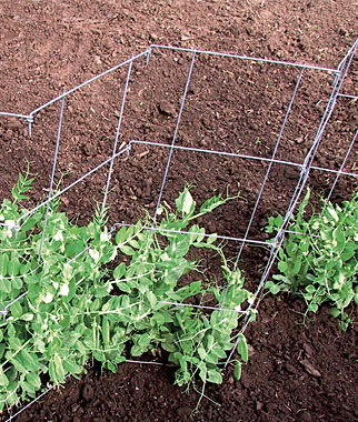 Pea And Cucumber Fence 2/Pack Pea Seeds, Peas Seed, Pea Seeds, Peas, Garden Peas, Garden Seeds, Vegetable Seeds, Garden Supplies