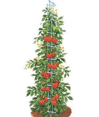 Tomato Towers plant supports, garden trellis, garden supplies, organic garden supplies, vegetable garden supplies