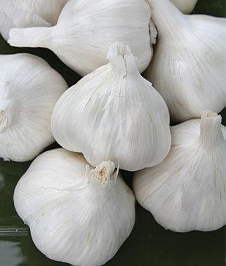 Garlic, Italian Late 1/2 lb. Garlic, Garlic Sets, Garlic Plants, Garlic bulbs, Garden Supplies, Vegetable Garden