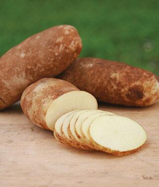 Potato, Cal White 1 Pack (10 mini tubers) Potato, Potatoes, Seed Potatoes, Potato Sets, Potato Seed, Garden Potatoes, Vegetable Seeds