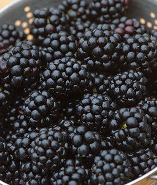 Blackberry, Chester 5 Bare RootPlants Blackberry, Blackberries, Blackberry Plants, Blackberry Roots, Blackberry Starts, Berry Plants