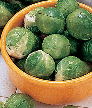 Brussels Sprouts, Dimitri Hybrid 1 Pkt. (25 seeds) Brussels Sprouts Seed, Brussels Sprout Seeds, Brussel Sprouts Seed, Garden Seeds, Vegetable Seeds