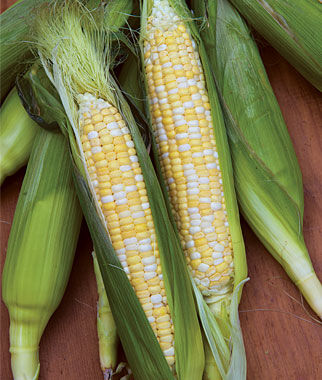 Corn, King Kool Hybrid 1 Pkt. (200 seeds) Corn Seeds, Corn Seed, Seed Corn, Corn, Sweet Corn Seeds, Super Sweet Corn Seeds, Garden Seeds