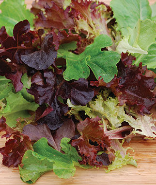 Lettuce, Baby Leaf Mix 1 Pkt. (100 seeds) Lettuce Seed, Lettuce Seeds, Salad Greens, Lettuce, Lettuce Mix, Mesclun, Garden Seeds, Salad Seeds