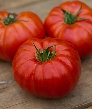 Tomato, Heritage Hybrid 1 Pkt. (30 seeds) Tomatoes, Tomato Seeds, Beefsteak Tomatoes, Slicing Tomatoes, Tomato Starts, Tomato Plants