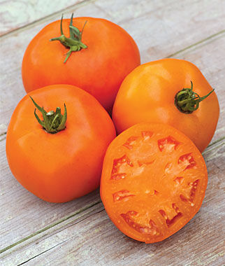 Tomato, Orange Slice Hybrid 1 Pkt. (35 seeds) Tomatoes, Tomato Seeds, Beefsteak Tomatoes, Slicing Tomatoes, Tomato Starts, Tomato Plants