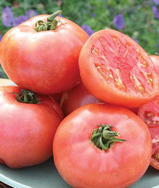 Tomato, Pink Pounder Hybrid 1 Pkt. (30 seeds)