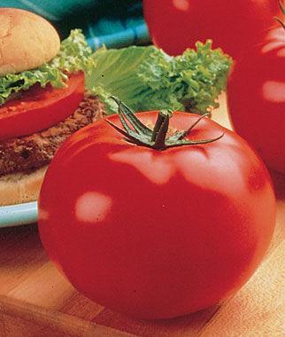 Tomato, Big Beef Hybrid 3 Plants, Tomatoes, Tomato Seeds, Beefsteak Tomatoes, Slicing Tomatoes, Tomato Starts, Tomato Plants