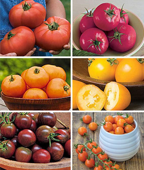 Tomato, Collection, Best of Show 6 Pkts. Tomatoes, Tomato Seeds, Beefsteak Tomatoes, Slicing Tomatoes, Tomato Starts, Tomato Plants