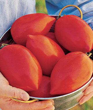 Tomato, Big Mama Hybrid 1 Pkt. (50 seeds) Tomatoes, Tomato Seeds, Beefsteak Tomatoes, Slicing Tomatoes, Tomato Starts, Tomato Plants