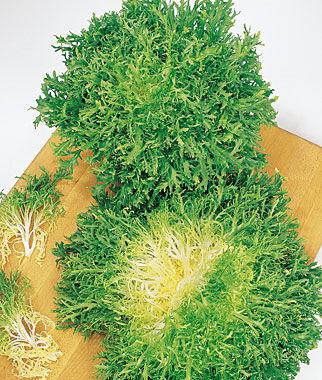 Endive, Galia Frisse 1 Pkt. (950 seeds) Salad Greens Seeds, Salad Greens Seed, Salad Seeds, Salad Greens, Garden Seeds, Vegetable Seeds