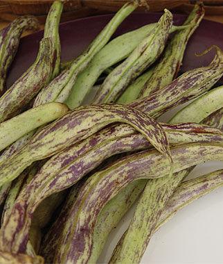 Bean, Rattlesnake Snap 1 Pkt. (1 oz.) Bean Seeds, Pole Beans, Bean - Pole, Vegetable Seeds, Garden Seeds, Seeds, Garden Supplies