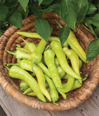 Pepper, Hot, Pepperoncini 3 Plants Hot Pepper Seeds, Chili Pepper Seeds, Chili Seeds, Pepper Seeds, Peppers, Chilis, Garden Seeds, Seed