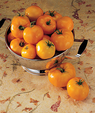 Tomato, Persimmon 1 Pkt.(25 Seeds) Heirloom Tomatoes, Heirloom Tomato Seeds, Heirloom Seeds, Heirloom Tomato Plants, Tomato Seeds
