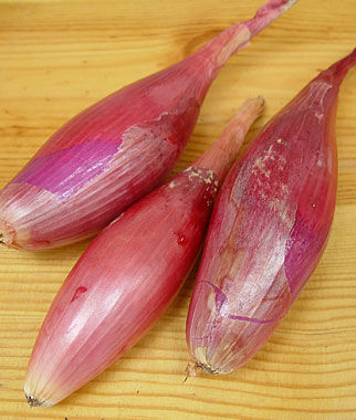 Onion, Italian Torpedo 1 Pkt. Onion Seeds, Onion Sets, Onion Plants, Scallion Seeds, Bunching Onions, Green Onions, Garden Seeds