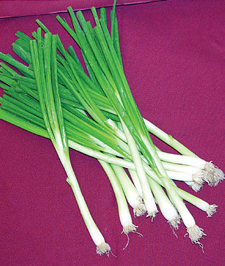 Onion, Tokyo Long White 1 Pkt. (800 seeds) Onion Seeds, Onion Sets, Onion Plants, Scallion Seeds, Bunching Onions, Green Onions, Garden Seeds