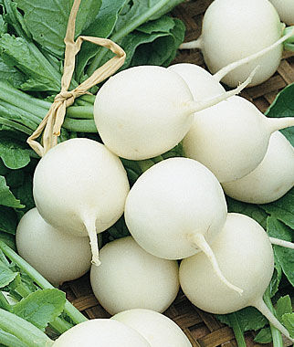 Radish, White Globe Hailstone 1 Pkt.(200 Seeds) Radish, Radish Seeds, Seeds, Vegetable Seeds, Garden Seeds, Vegetable, Garden